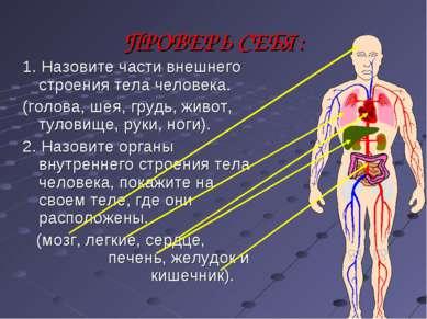 ПРОВЕРЬ СЕБЯ: 1. Назовите части внешнего строения тела человека. (голова, шея...