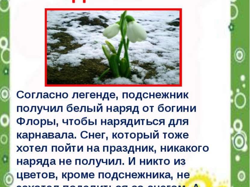 Согласно легенде, подснежник получил белый наряд от богини Флоры, чтобы наряд...
