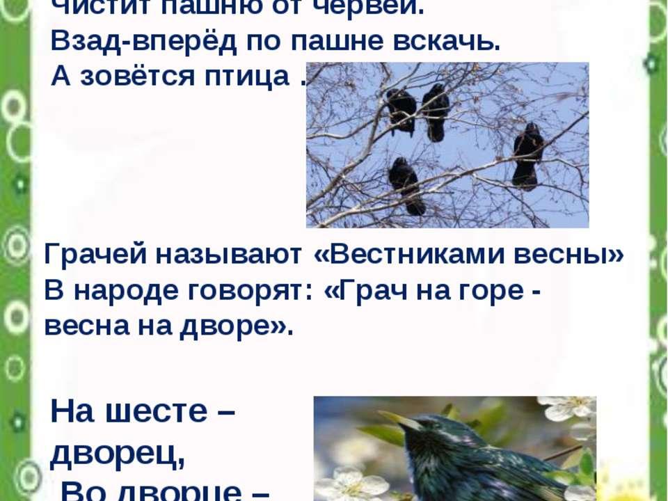 Всех перелётных птиц черней, Чистит пашню от червей. Взад-вперёд по пашне вск...