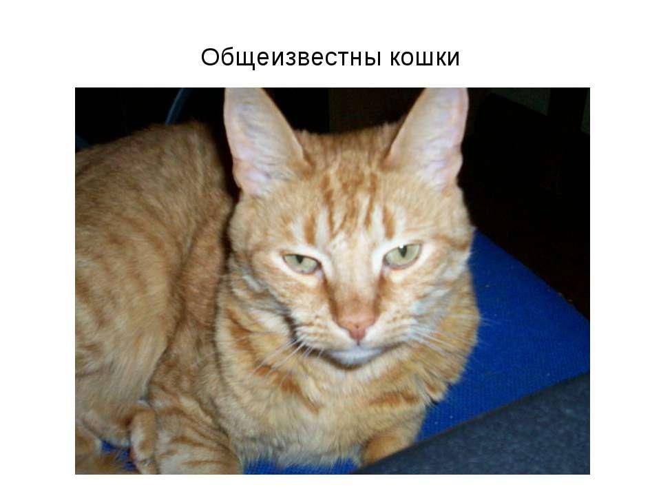 Общеизвестны кошки