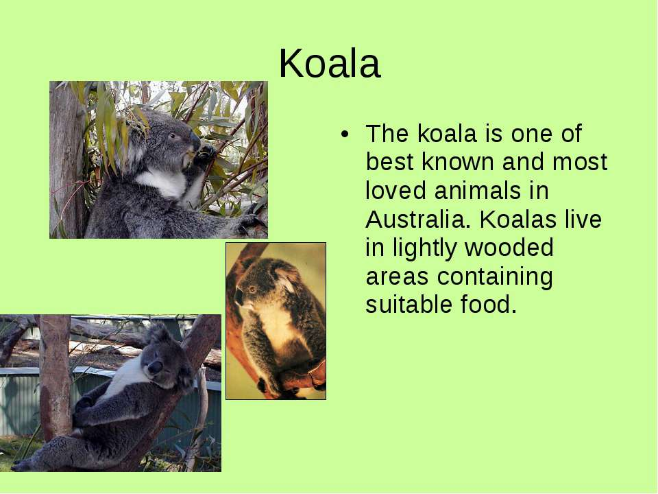 Koala The koala is one of best known and most loved animals in Australia. Koa...