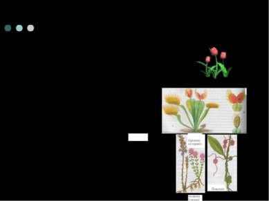 Способы питания растений 1)фотосинтезирующие растения 2) растения- хищники 3)...