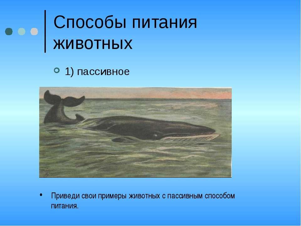 Способы питания животных 1) пассивное Приведи свои примеры животных с пассивн...
