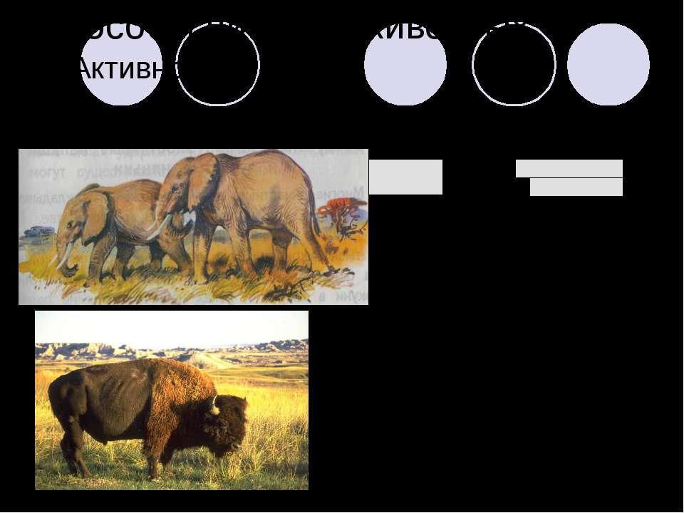 Способы питания животных 2. Активное: а) пастьба б) поиск
