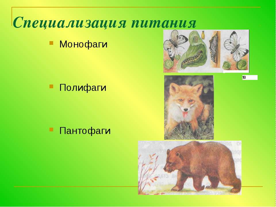 Специализация питания Монофаги Полифаги Пантофаги