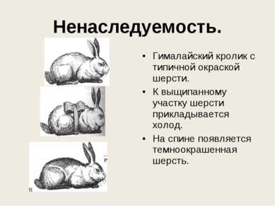 Ненаследуемость. Гималайский кролик с типичной окраской шерсти. К выщипанному...