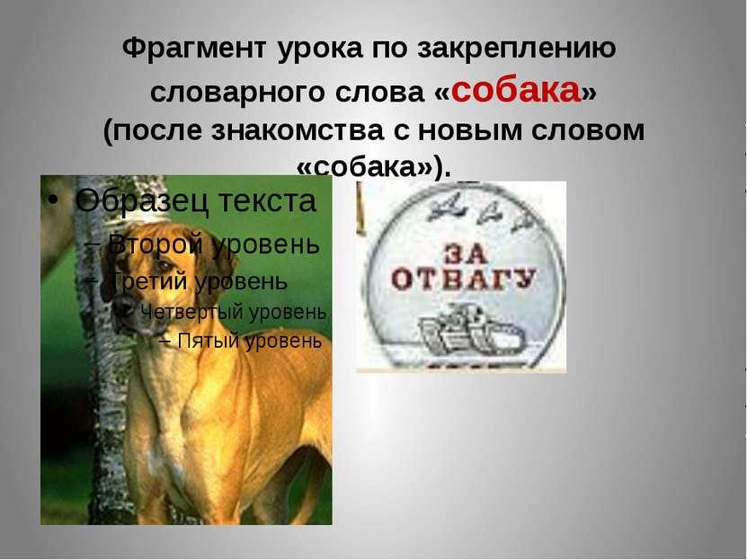 Фрагмент урока по закреплению словарного слова «собака» (после знакомства с н...