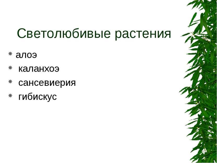 Светолюбивые растения алоэ каланхоэ сансевиерия гибискус
