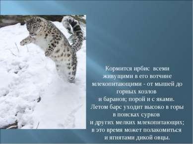 Кормится ирбис всеми живущими в его вотчине млекопитающими - от мышей до гор...
