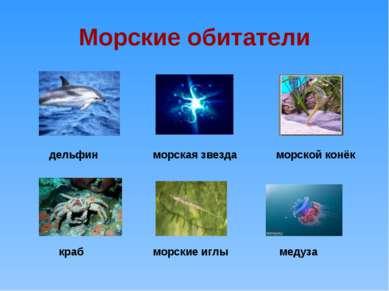 Морские обитатели дельфин краб морские иглы медуза морская звезда морской конёк