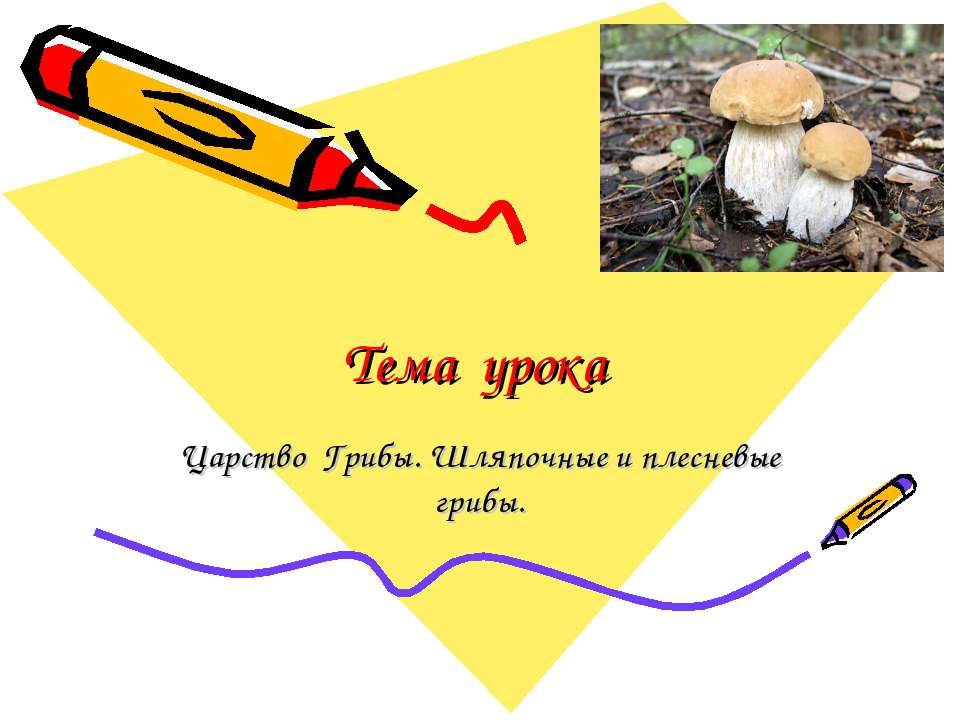 Тема урока Царство Грибы. Шляпочные и плесневые грибы.