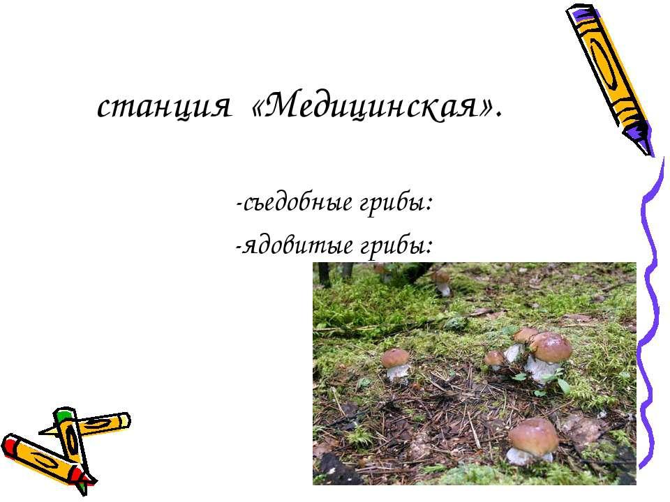 станция «Медицинская». -съедобные грибы: -ядовитые грибы: