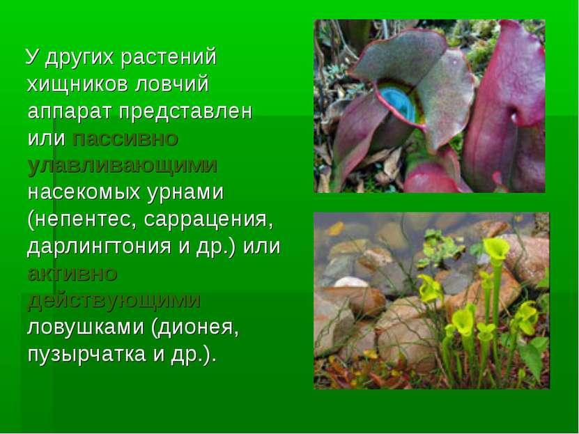 У других растений хищников ловчий аппарат представлен или пассивно улавливающ...