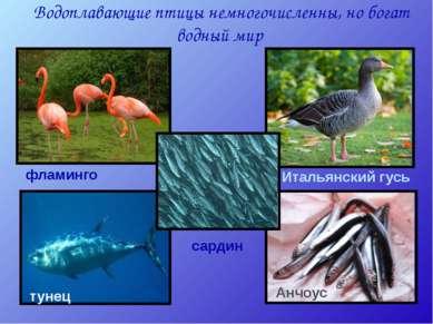 Водоплавающие птицы немногочисленны, но богат водный мир фламинго Итальянский...