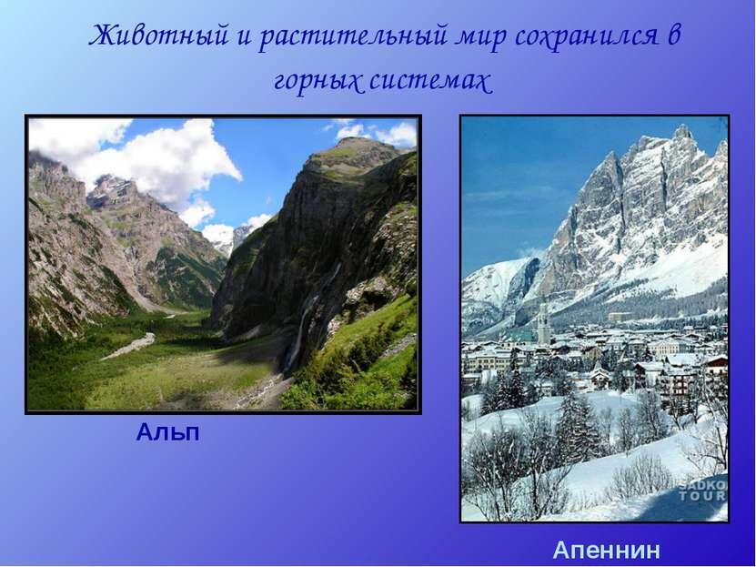 Животный и растительный мир сохранился в горных системах Альп Апеннин