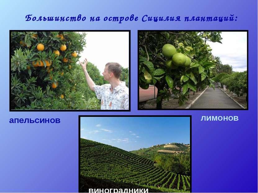 Большинство на острове Сицилия плантаций: апельсинов лимонов виноградники