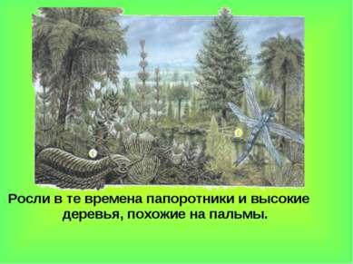 Росли в те времена папоротники и высокие деревья, похожие на пальмы.
