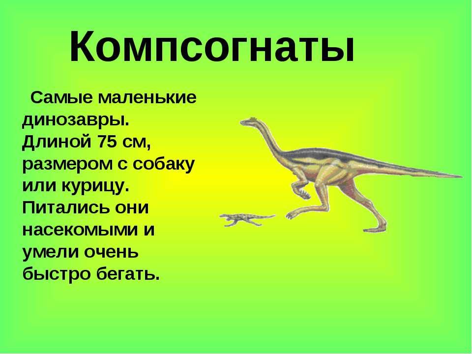 Компсогнаты Самые маленькие динозавры. Длиной 75 см, размером с собаку или ку...