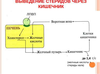 ВЫВЕДЕНИЕ СТЕРИДОВ ЧЕРЕЗ КИШЕЧНИК ЛПВП до 1,4 (желчные кислоты + стериды кала)
