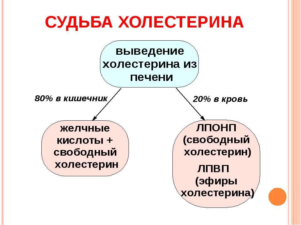 СУДЬБА ХОЛЕСТЕРИНА