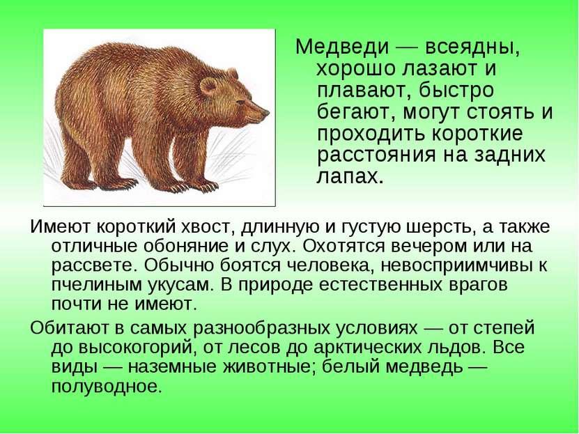 Медведи — всеядны, хорошо лазают и плавают, быстро бегают, могут стоять и про...