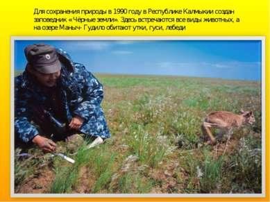 Для сохранения природы в 1990 году в Республике Калмыкии создан заповедник « ...