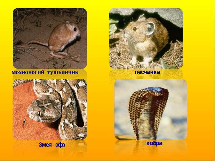 мохноногий тушканчик песчанка Змея- эфа кобра