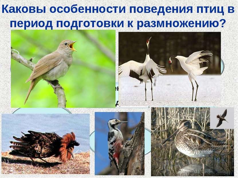 Каковы особенности поведения птиц в период подготовки к размножению?