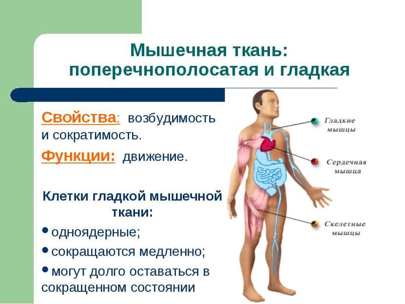 Мышечная ткань: поперечнополосатая и гладкая Свойства: возбудимость и сократи...