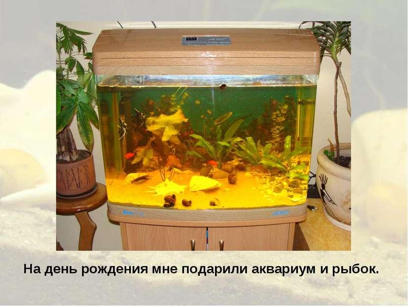 На день рождения мне подарили аквариум и рыбок.