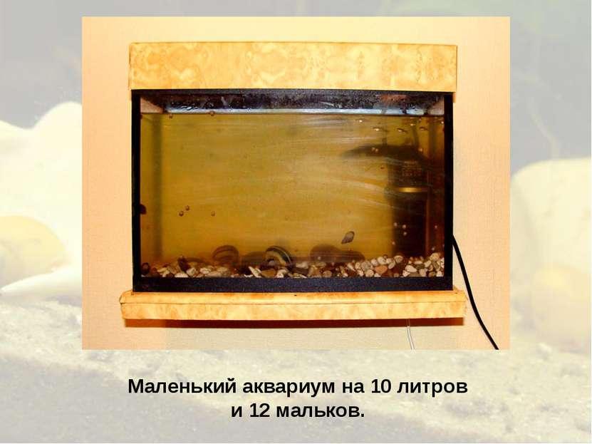 Маленький аквариум на 10 литров и 12 мальков.