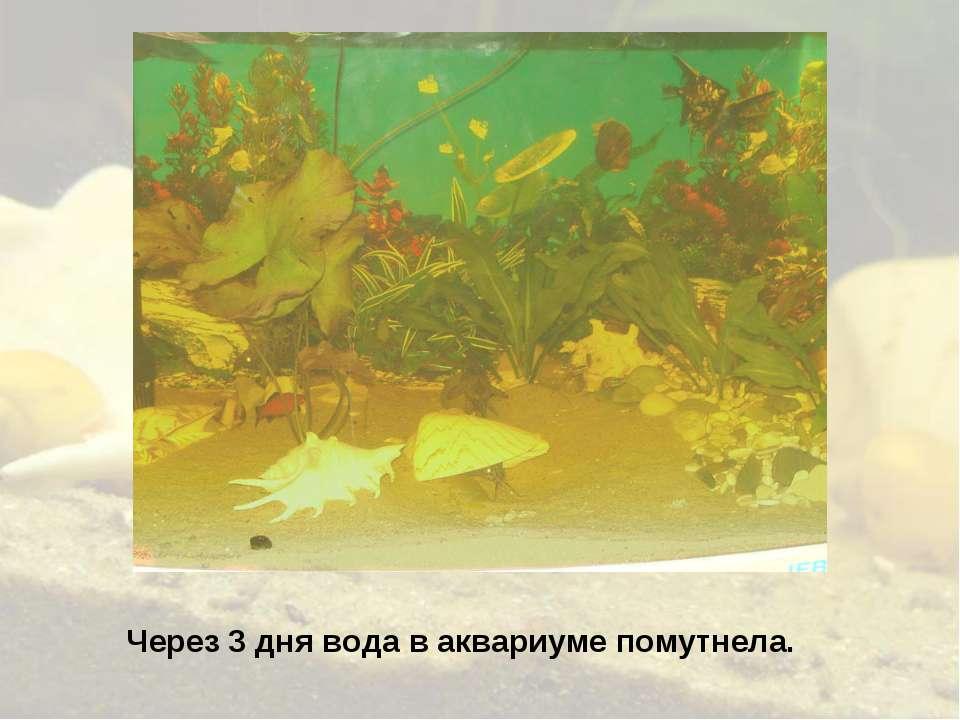 Через 3 дня вода в аквариуме помутнела.