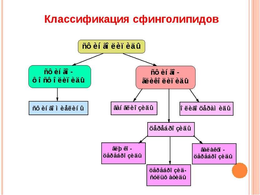 Классификация сфинголипидов