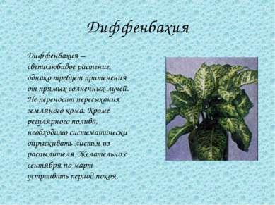 Диффенбахия Диффенбахия – светолюбивое растение, однако требует притенения от...