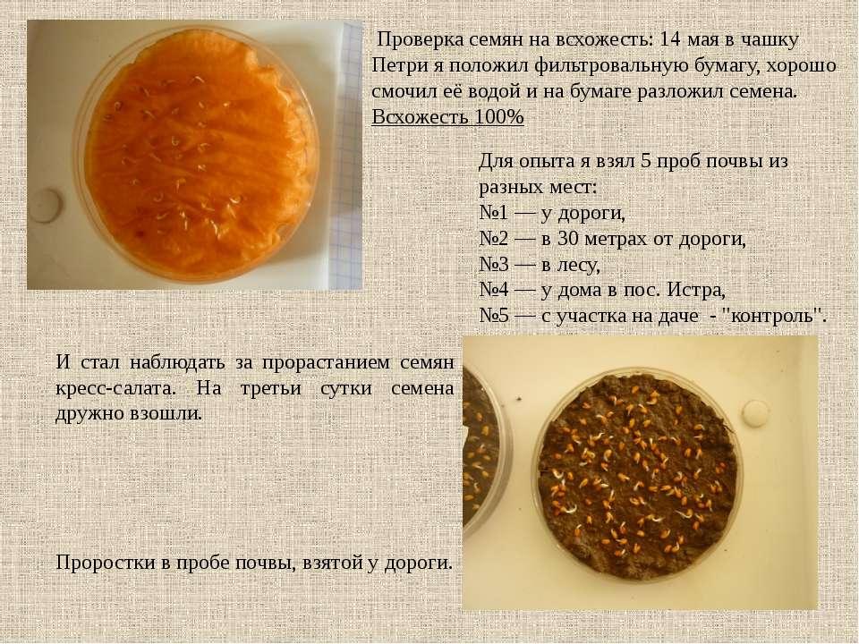 Проверка семян на всхожесть: 14 мая в чашку Петри я положил фильтровальную бу...