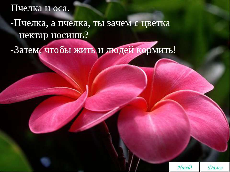 Пчелка и оса. -Пчелка, а пчелка, ты зачем с цветка нектар носишь? -Затем, что...