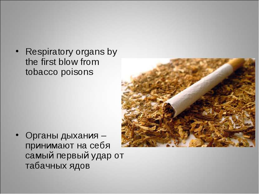 Respiratory organs by the first blow from tobacco poisons Органы дыхания – пр...