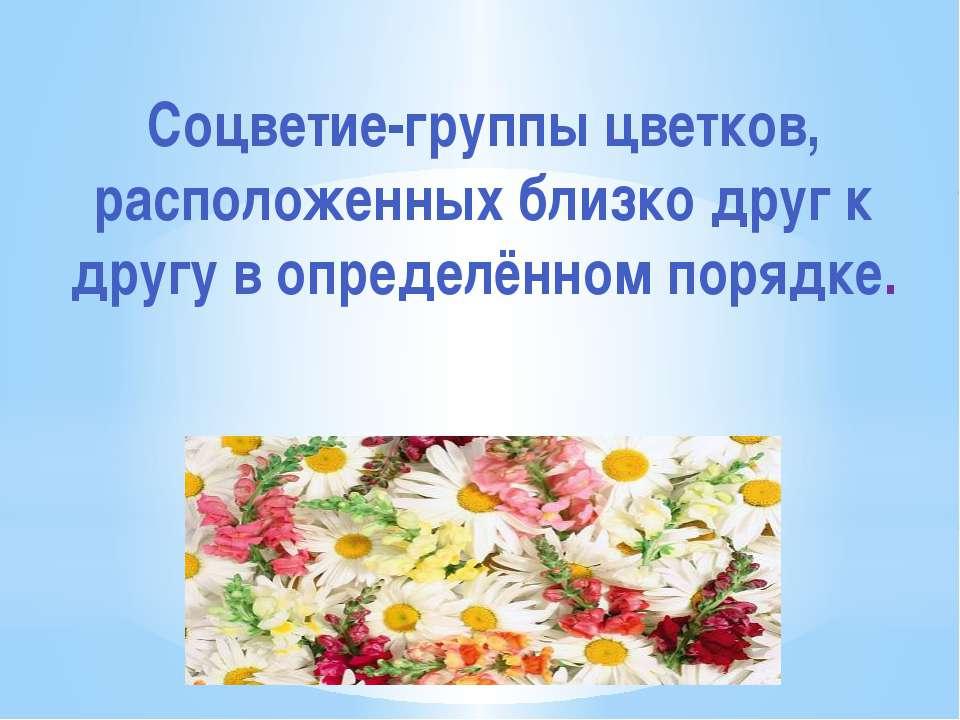 Соцветие-группы цветков, расположенных близко друг к другу в определённом пор...