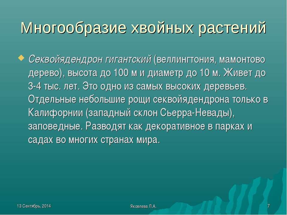 * Яковлева Л.А. * Многообразие хвойных растений Секвойядендрон гигантский (ве...