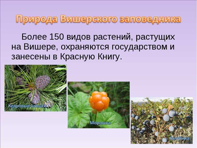 Более 150 видов растений, растущих на Вишере, охраняются государством и занес...