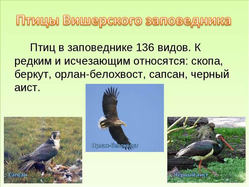 Птиц в заповеднике 136 видов. К редким и исчезающим относятся: скопа, беркут,...