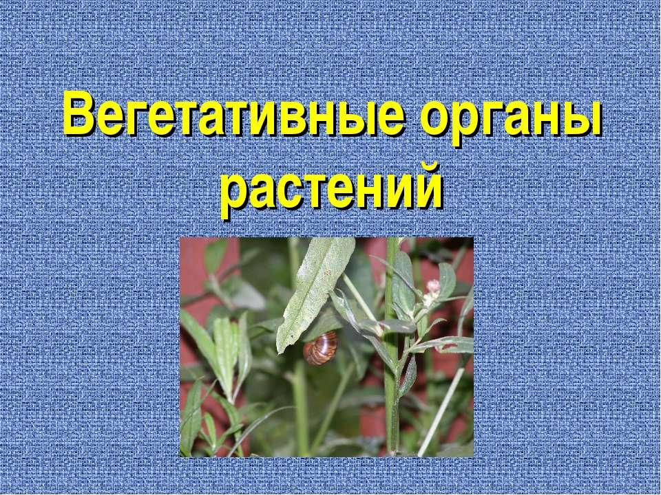 Вегетативные органы растений