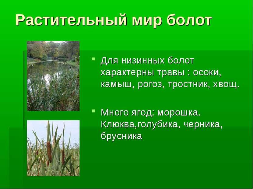 Растительный мир болот Для низинных болот характерны травы : осоки, камыш, ро...