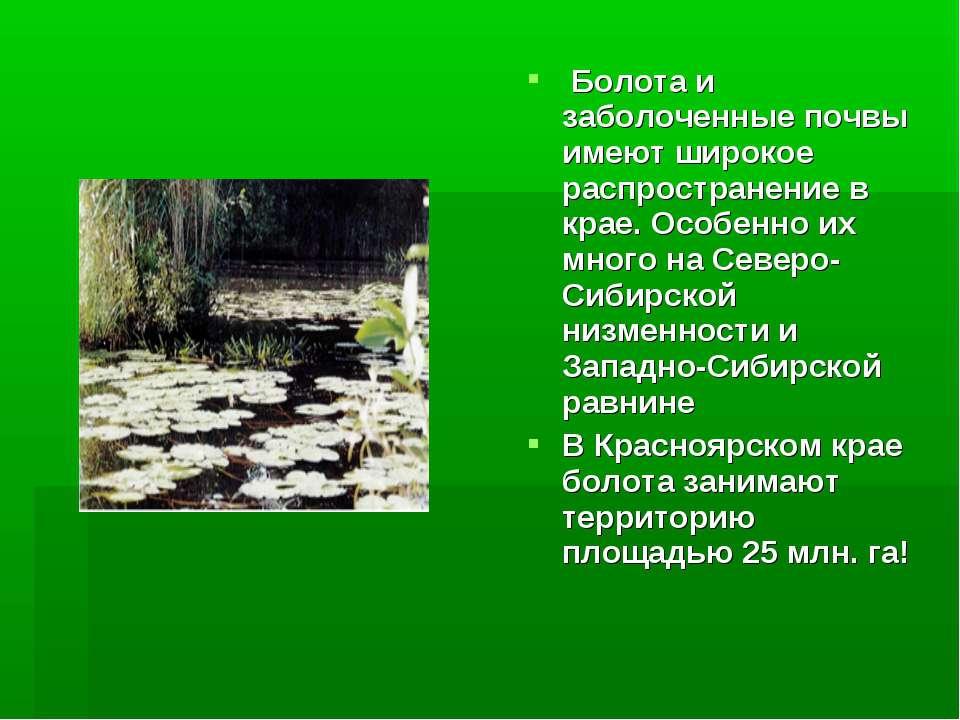 Болота и заболоченные почвы имеют широкое распространение в крае. Особенно их...