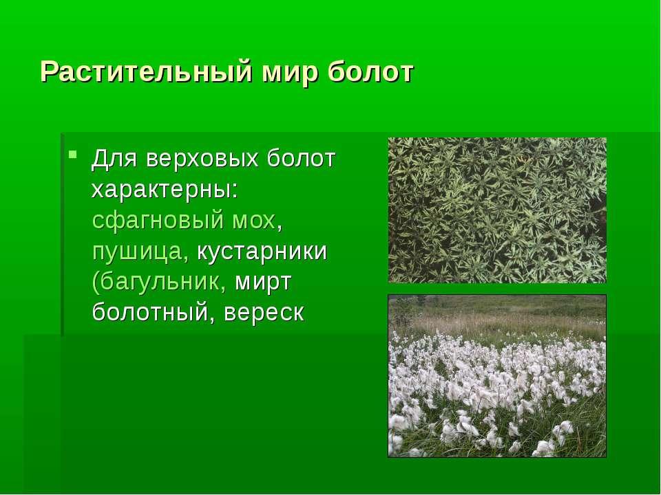 Растительный мир болот Для верховых болот характерны: сфагновый мох, пушица, ...