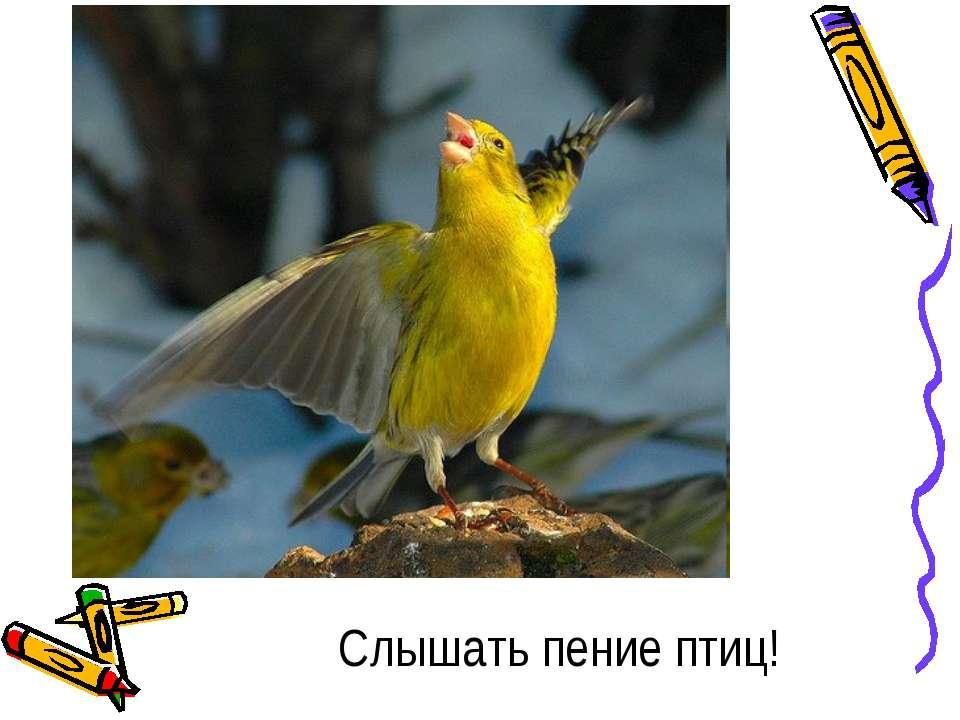 Слышать пение птиц!