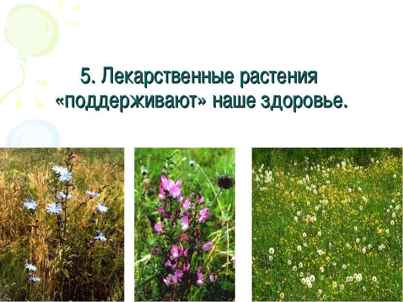 5. Лекарственные растения «поддерживают» наше здоровье.