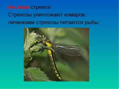 Не лови стрекоз! Стрекозы уничтожают комаров; личинками стрекозы питаются рыбы;