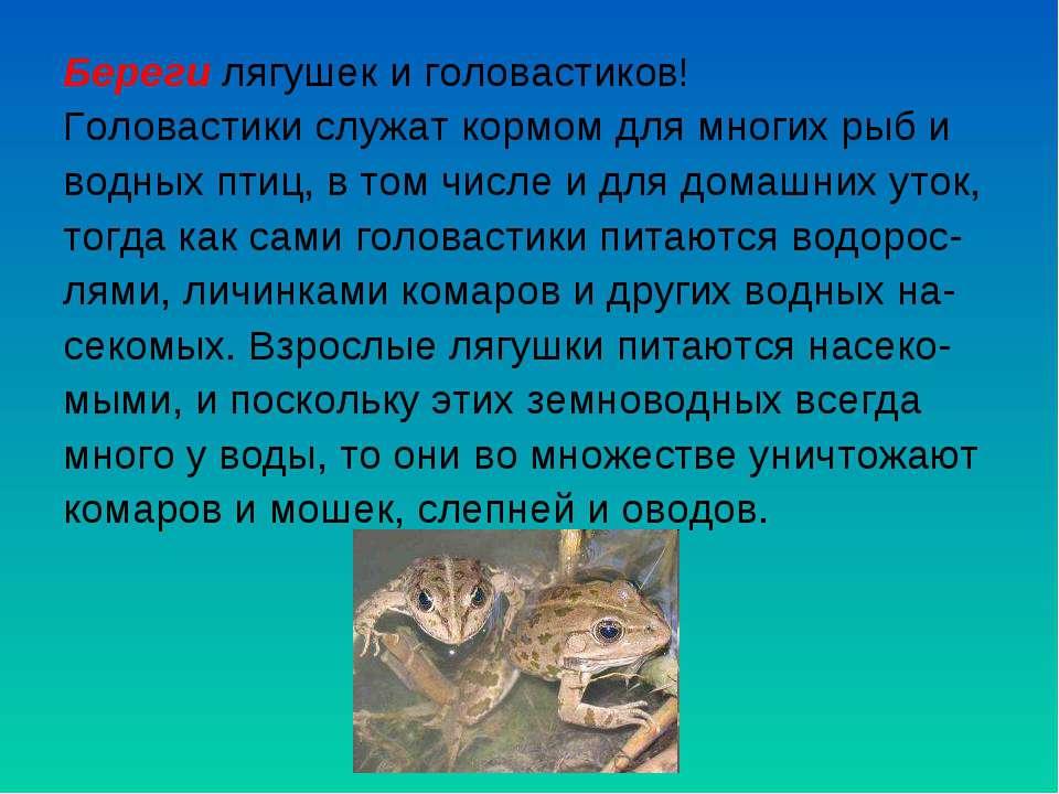 Береги лягушек и головастиков! Головастики служат кормом для многих рыб и вод...