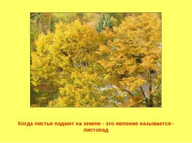 Когда листья падают на землю - это явление называется - листопад